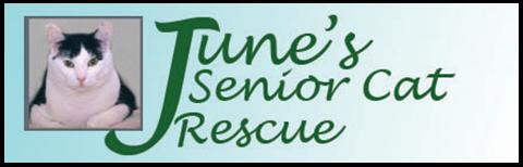 Junes Senior Cat Rescue